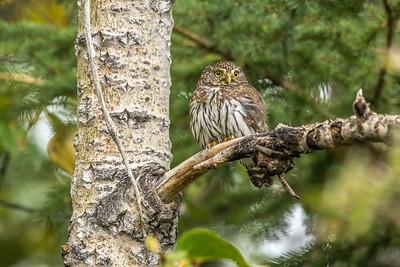 OWL_5153