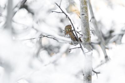 OWL_3923