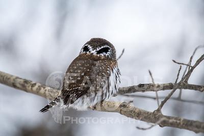OWL_1195
