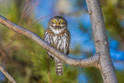 OWL_6367
