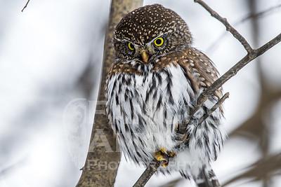 OWL_1311