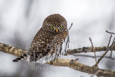 OWL_1187