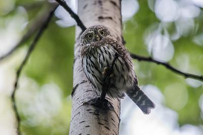 OWL_2670
