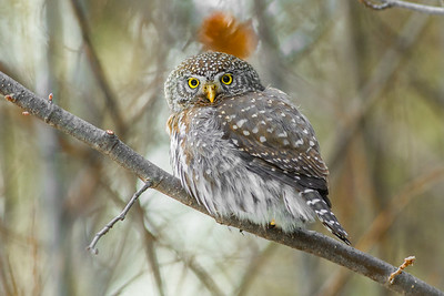 OWL_8051