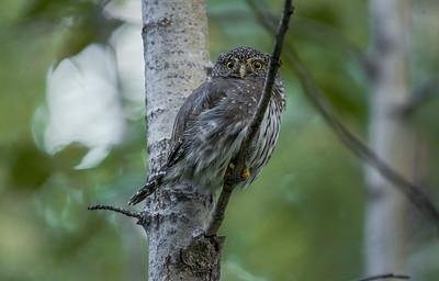 OWL_5074