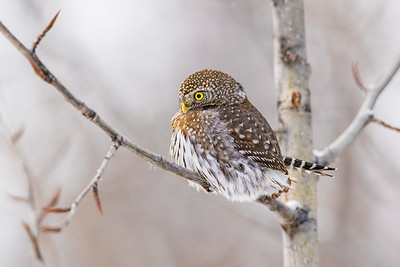 OWL_0507