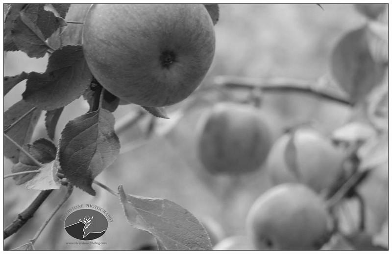 Sweet Apple Love Inside