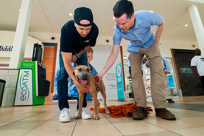 Dog Days of Summer Pet Microchip & Adoption Event with CMPD @Northlake Mall by Jon Strayhorn