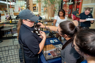 Northlake Mall CMPD Pet Adoption 6-29-19 by Jon Strayhorn