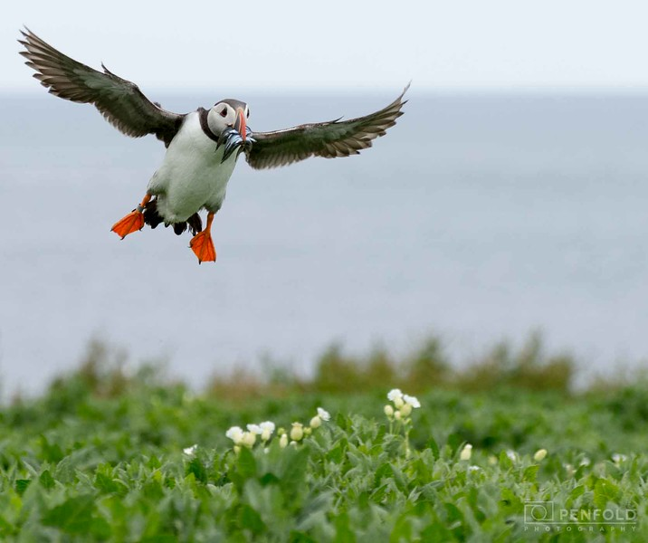 Farne Puffin Feeder