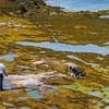 Seaweed Heavan