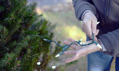 Ann Sabol, of Northumberland, strings lights around a Christmas Tree at King Street Park in Northumberland on November 16, 2012. The park is lined with twenty trees that have been provided by the Soutside Fire Department of Riverside.