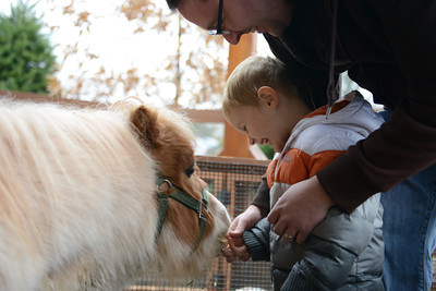 Conner George, 3, and his father Dave, of Montoursville, feed a horse in the Petting Zoo.