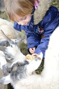 Leiff Knight, 4 of Milton, feeds goats in the Petting Zoo.