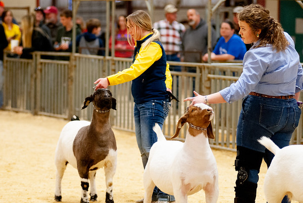 2020_nw_district_goats007