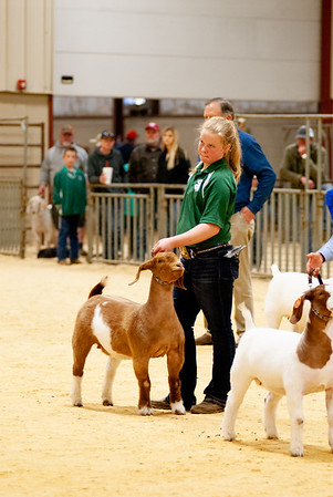 2020_nw_district_goats016