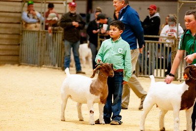 2020_nw_district_goats009