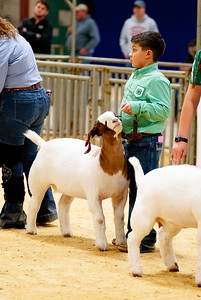 2020_nw_district_goats006