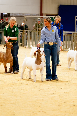 2020_nw_district_goats015