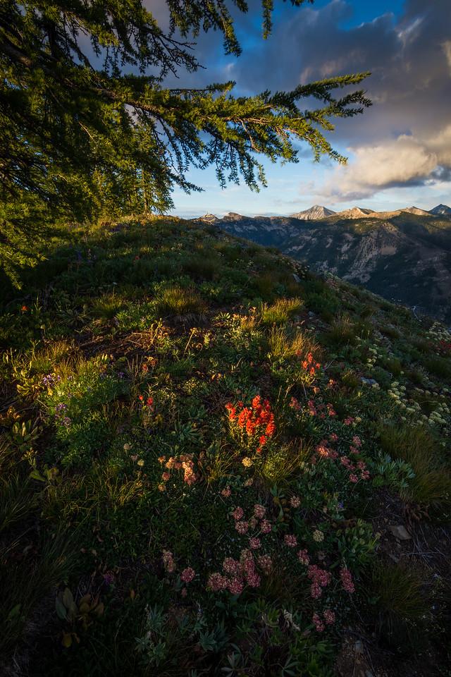High Meadows of the Cascades