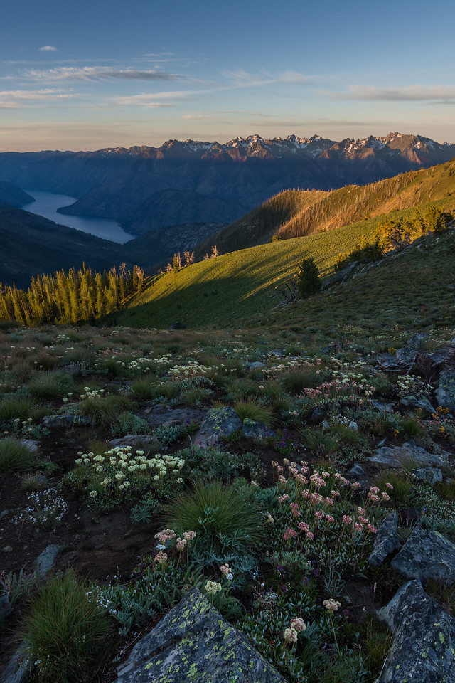 Verdant Summer in the High Country