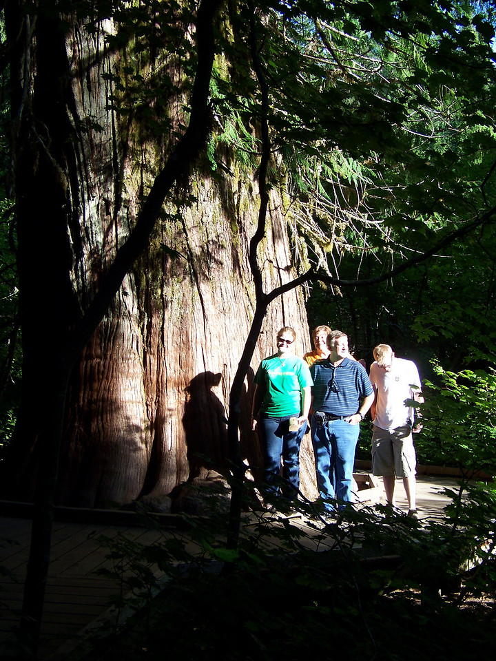 I made Jenna, Wendy, Mark and Josh pose in the blindingly-bright sun right next to this big cedar--easily 40 feet around at the base!<br /> [Mount Rainier - Grove of the Patriarchs]