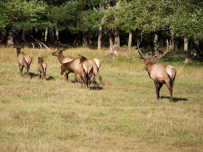 A small herd of Elk.  I think we all enjoyed our stop at Northwest Trek.  The land here is beautiful, with a wide variety of environments for the different animals.