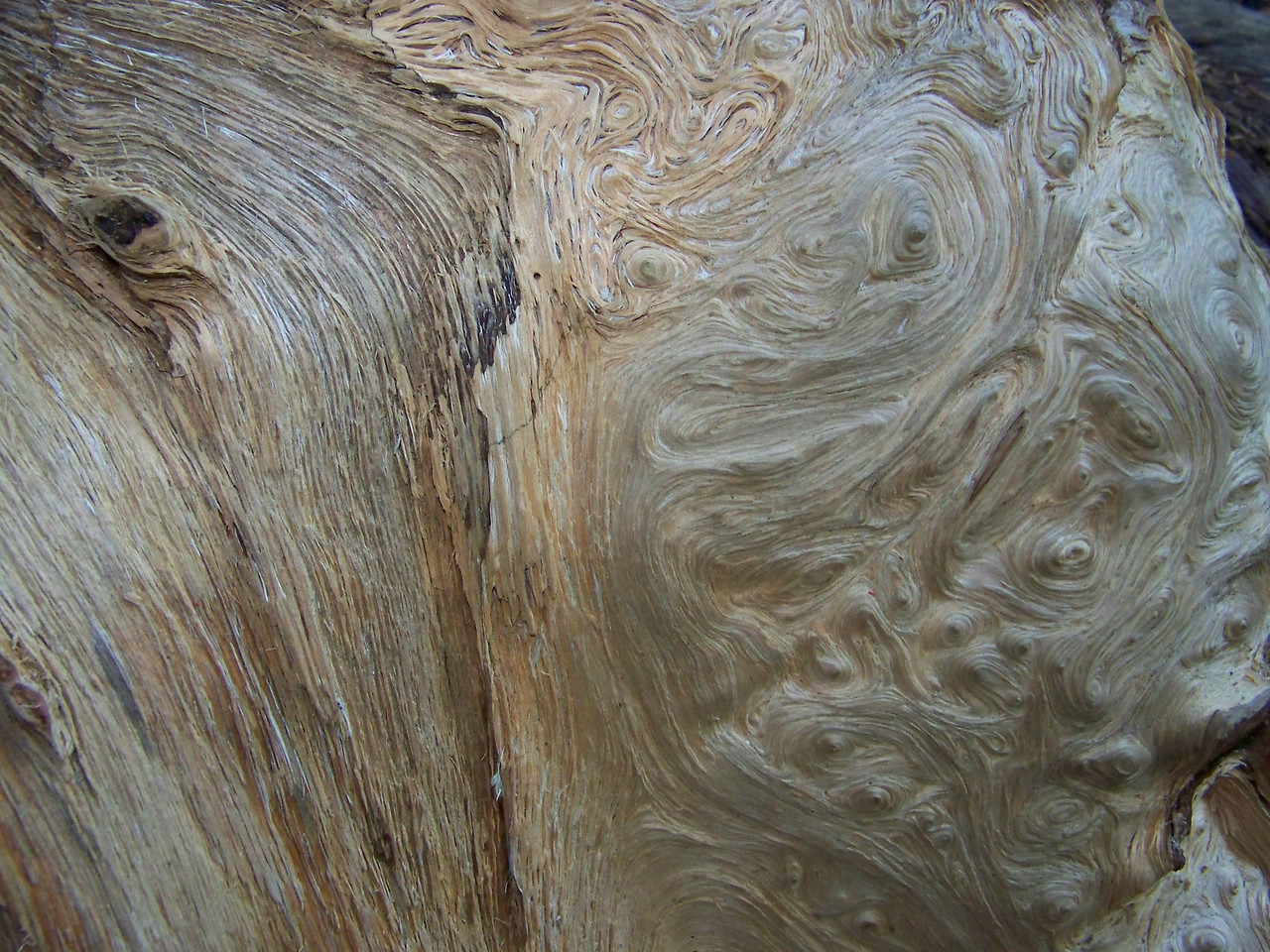 Very interesting patterns in the wood of a fallen tree.<br /> [Mount Rainier - Grove of the Patriarchs]
