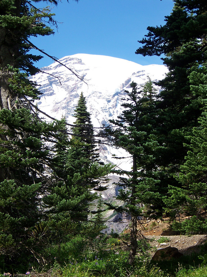 This shot was taken from our table at the large picnic area just below Paradise.  Mom loved picnicing here, so we scattered some of the ashes in this area.<br /> [Mount Rainier]