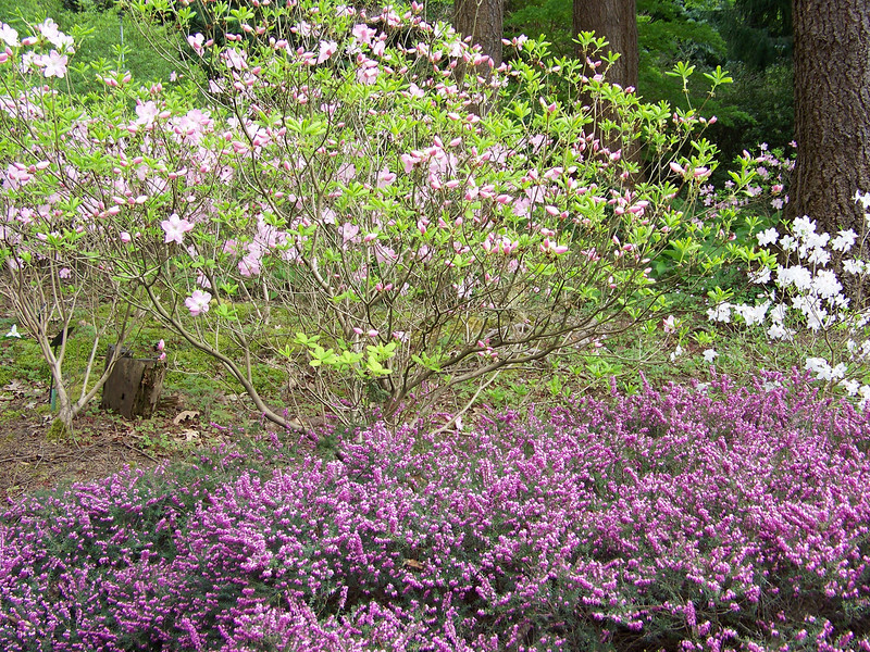 Rhododendron Species Botanical Garden.