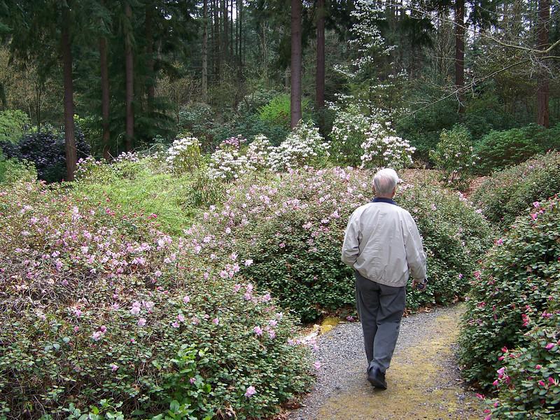 Dad at the Rhododendron Species Botanical Garden.