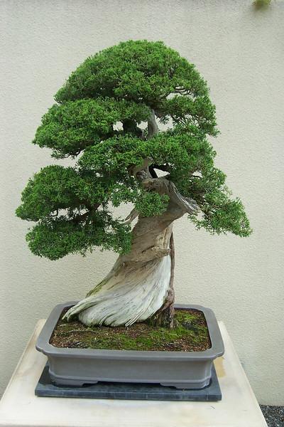 Weyerhaeuser bonsai collection.