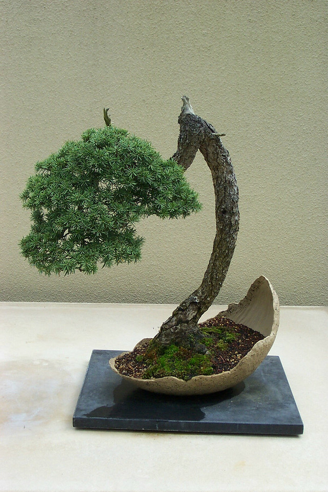 Weyerhaeuser bonsai collection.  They're in some amazing shapes!
