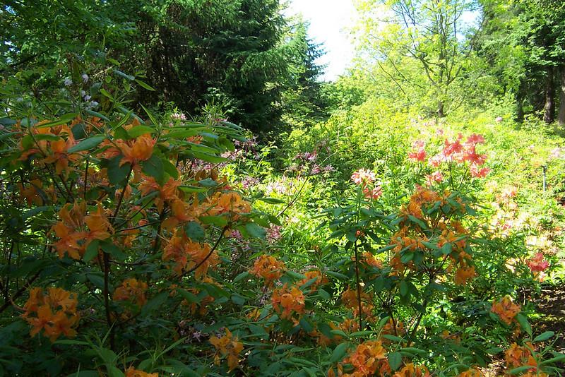 Rhododendron Species Botanical Garden.