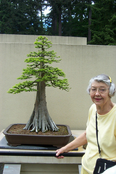 Mom at the Weyerhaeuser bonsai collection.