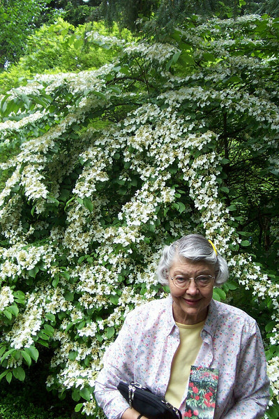 Mom poses with the blooms at the Rhododendron Species Botanical Garden.