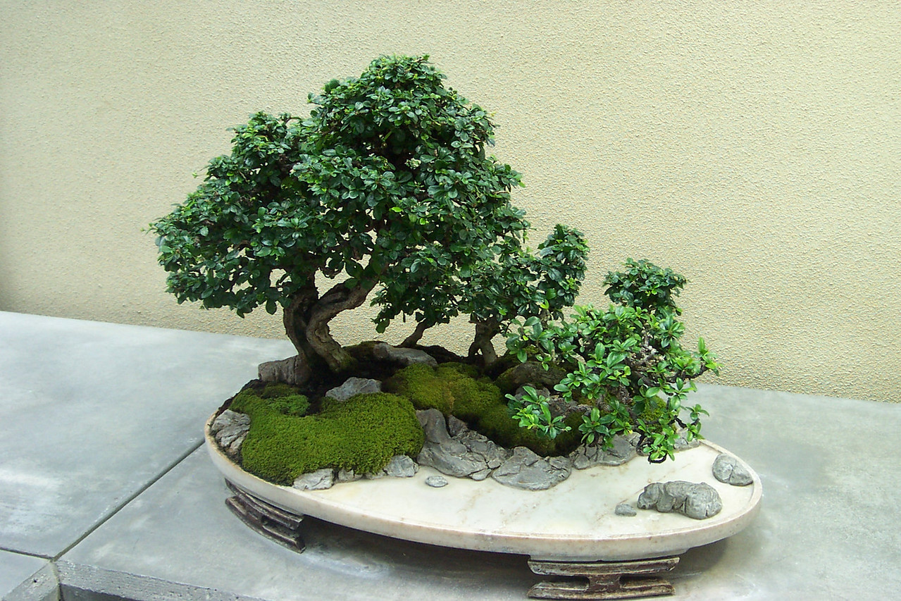 Weyerhaeuser bonsai collection.  They have many others that I didn't photograph.  It's a neat place to visit!