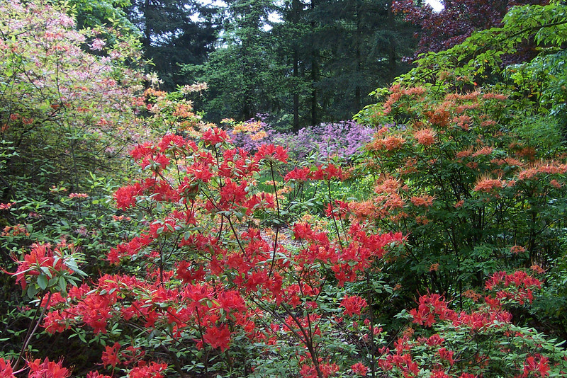 Weyerhaeuser just donated the land.  The plants are tended by members of the Rhododendron Society.