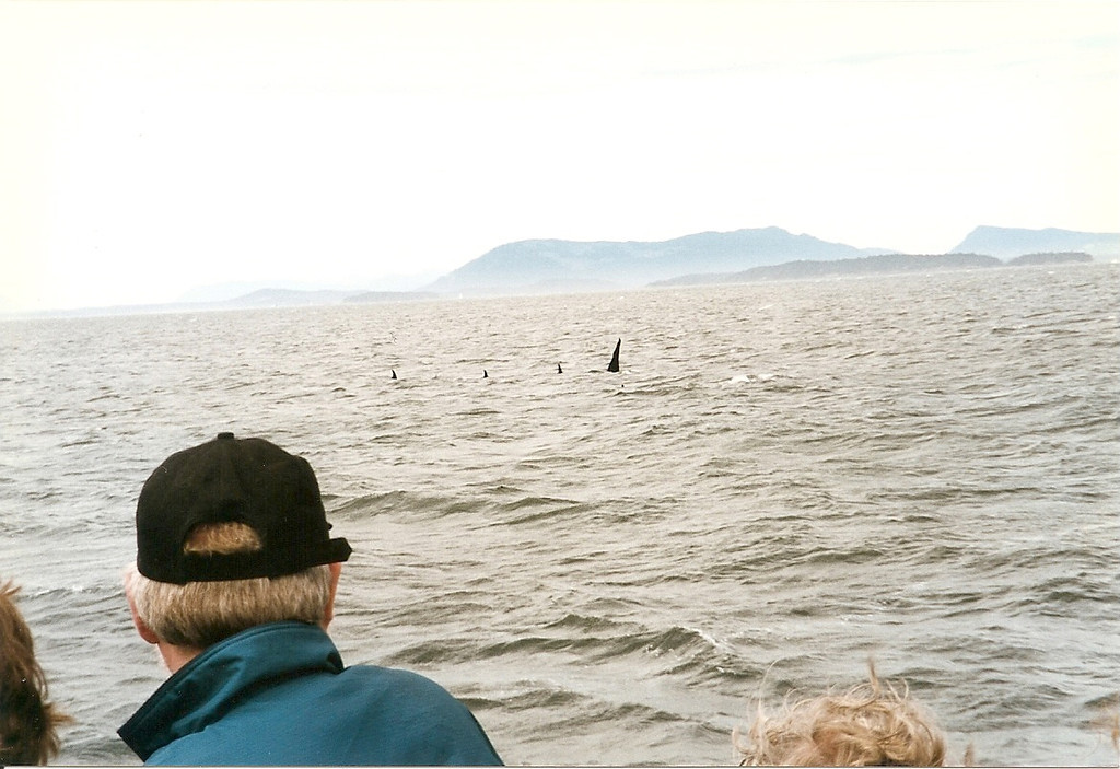 We saw several different groups of whales coming from different directions and converging on this area.