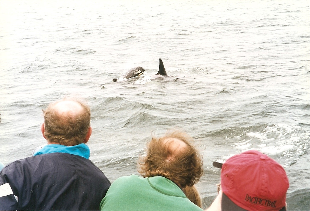 However, if the whales approach <b><i>you</i></b>, that's a different matter!