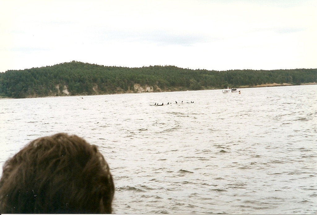 We finally spot some whales!  Sorry I didn't have a better zoom lens on my camera!