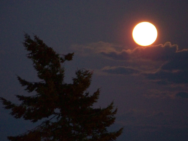 "The ""supermoon"" of May 5th, 2012, as photographed from my balcony in Ballard.  This is the cropped version."
