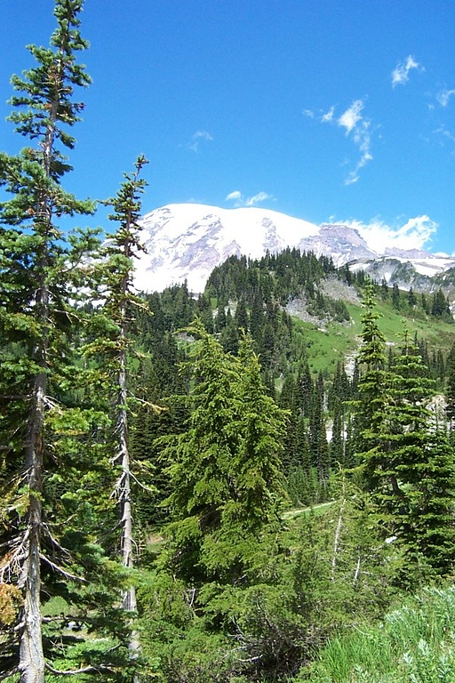 Paradise at Mount Rainier.