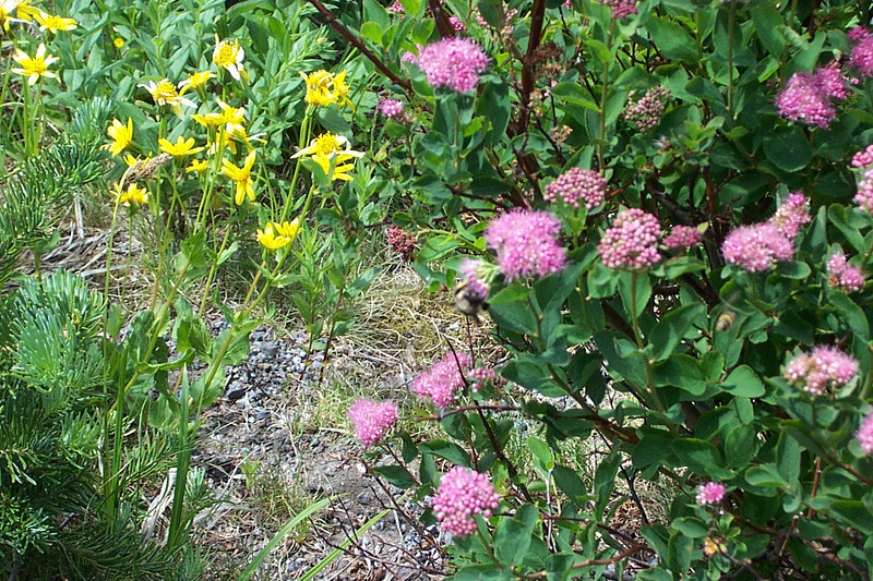 Even though it was July, spring was late this year.  The wildflowers were just getting started.