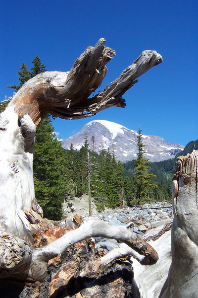 Mangled tree roots left in the riverbed make a good frame for the Mountain!