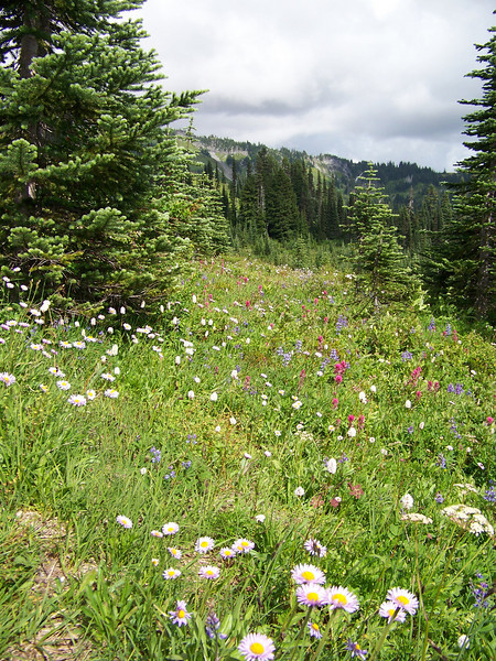 Since it was so late in the season, I was pleasantly surprised to find so many wildflowers still blooming at Paradise.