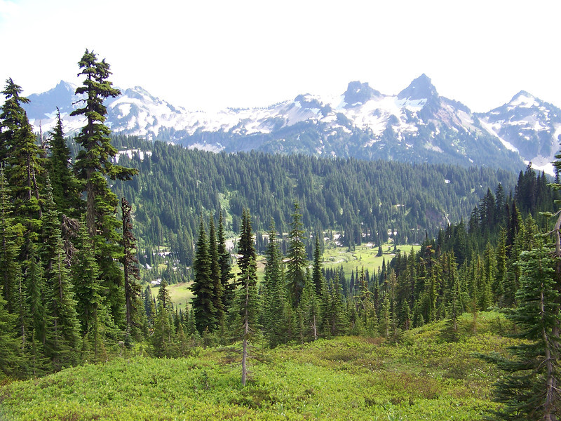 Looking toward the Tatoosh Range.