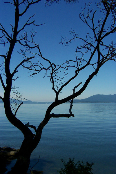 The stark limbs of a tree overlooks Puget Sound.  This was taken on Chuckanut Drive, just before we drove through Bellingham.