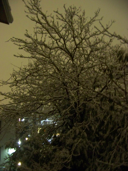 January 12, 2011.  A tree behind my building.