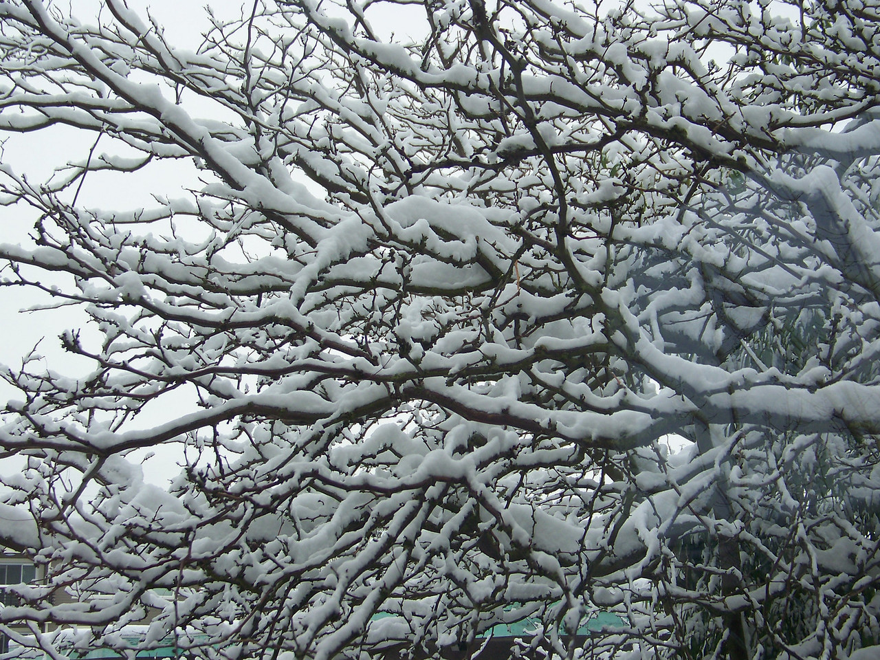December 22, 2008.  The following day.  Even more snow has fallen!